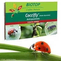 80 larves de coccinelle contre pucerons