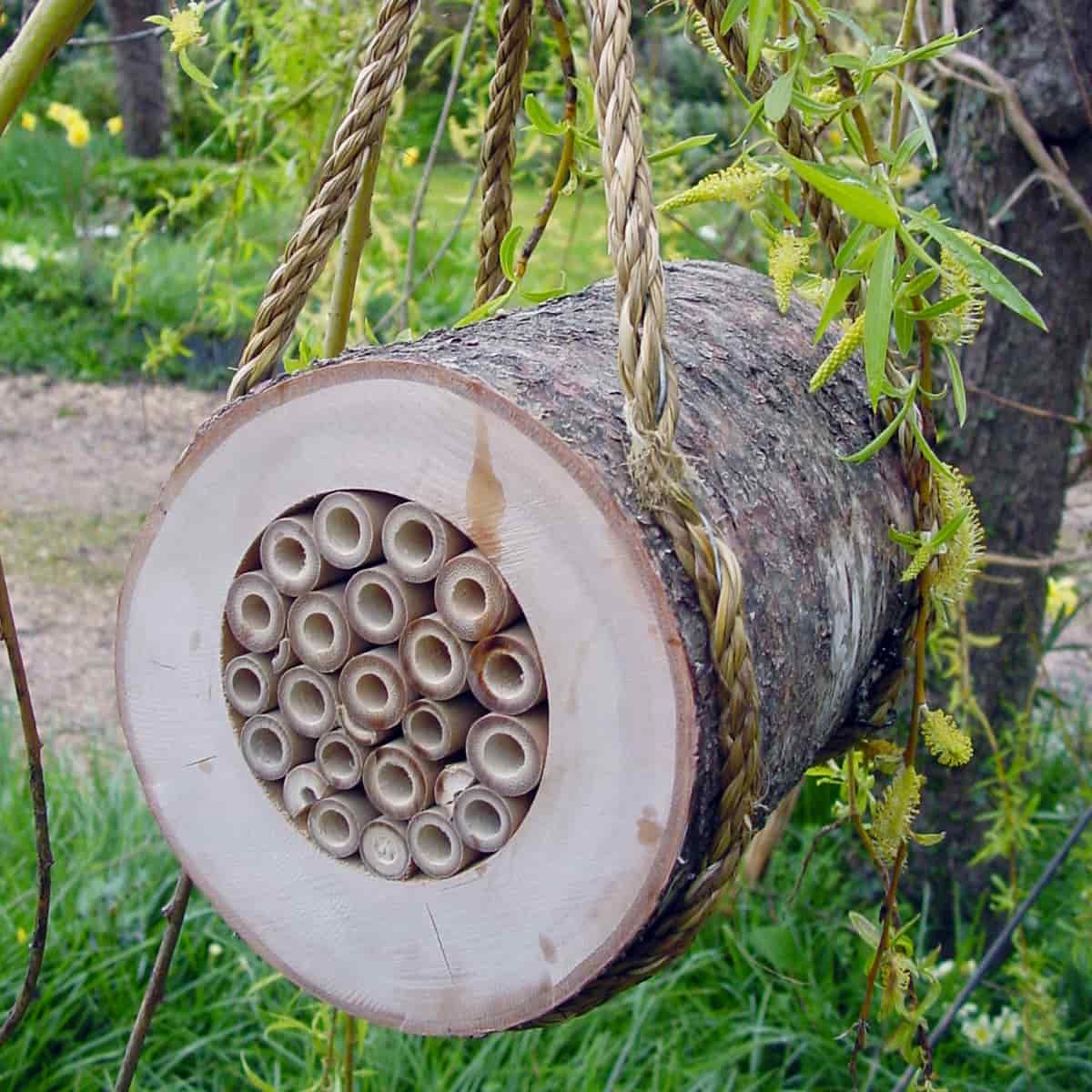 maison abeilles maisons abris animaux. Black Bedroom Furniture Sets. Home Design Ideas