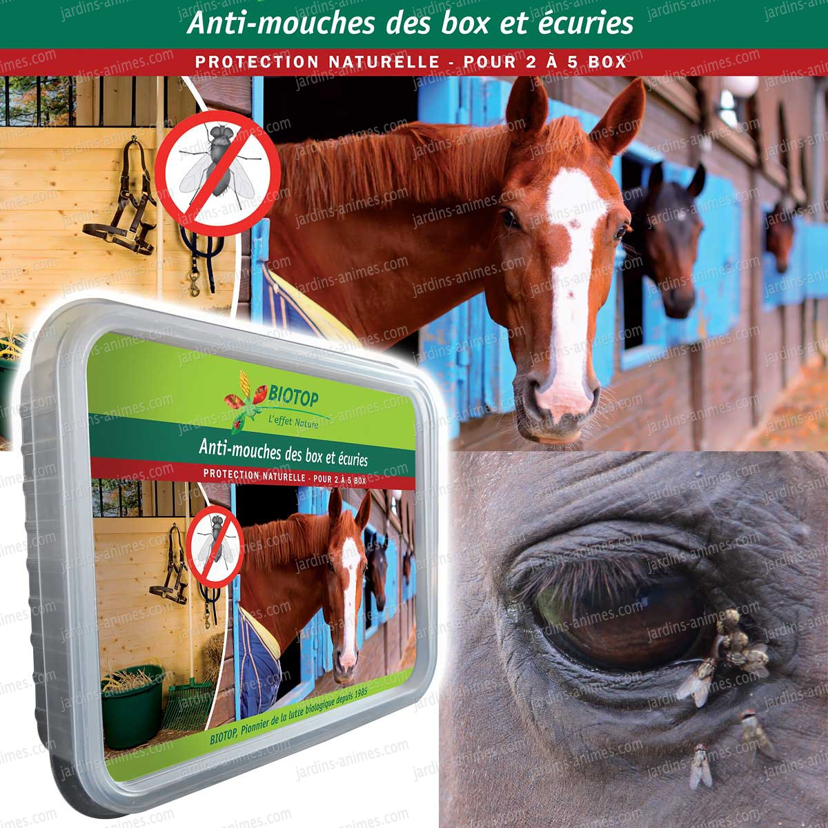 Anti mouche cheval maison efficace ventana blog for Anti mouches maison