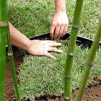 Barrière Anti-Rhizome Bambou 10x0.73m Bidim