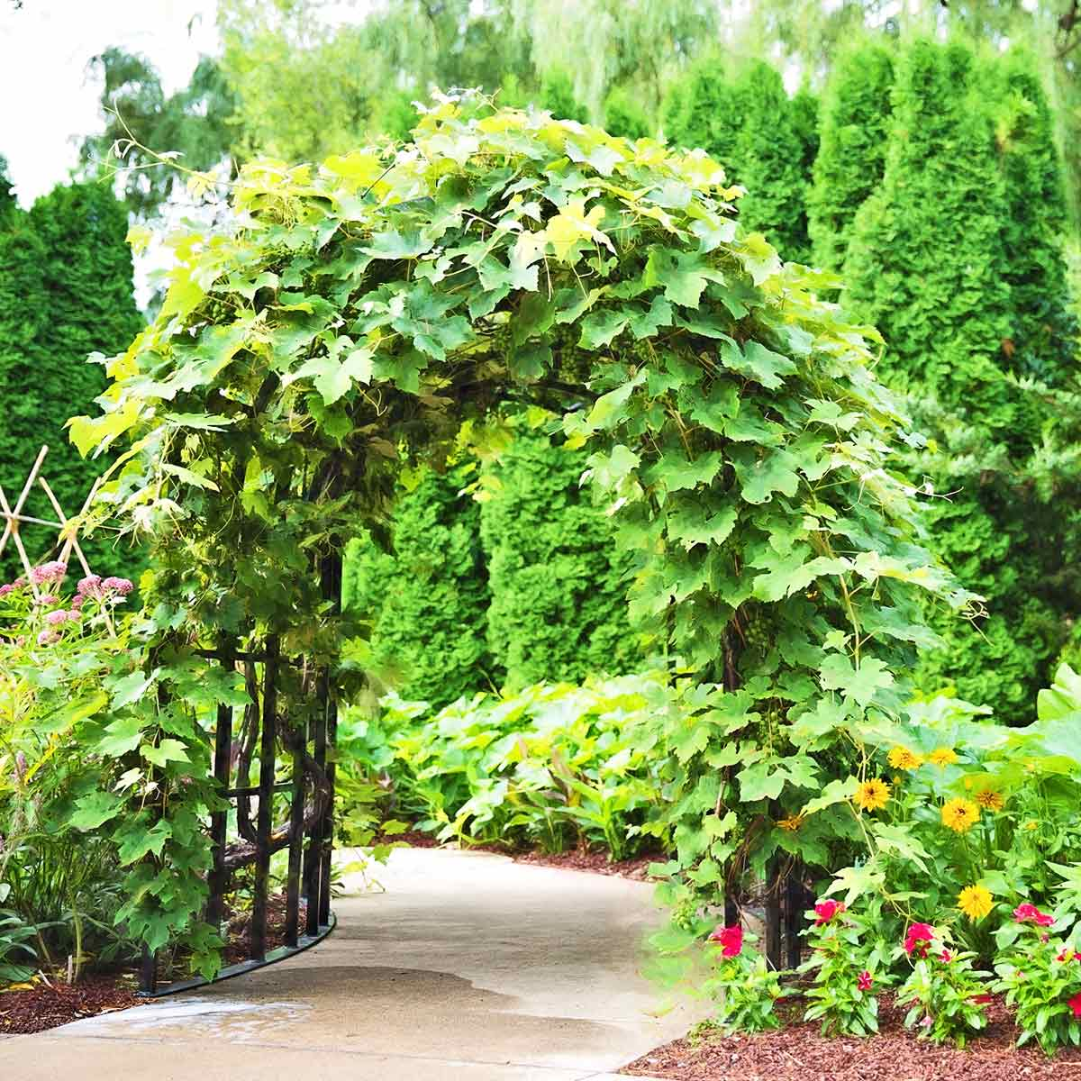 Pergola, tonnelle et arche de jardin | jardins-animes.com