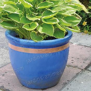 Anti limaces ruban en cuivre 4m x 3cm pour pots anti for Bande cuivre anti mousse