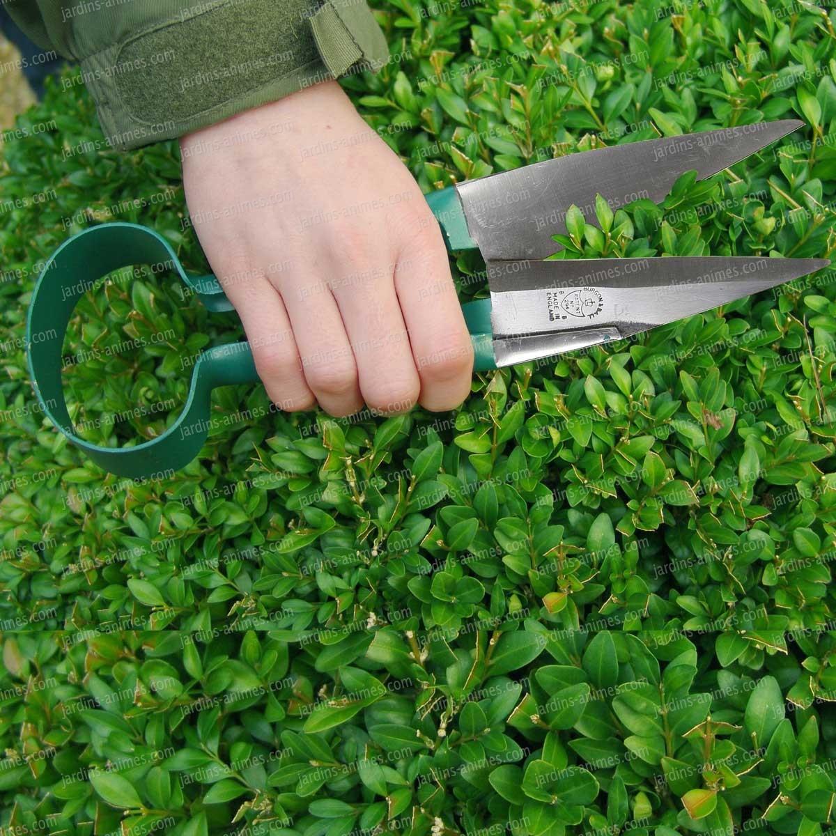 Ciseau à buis vert - Art Topiaire, Buis