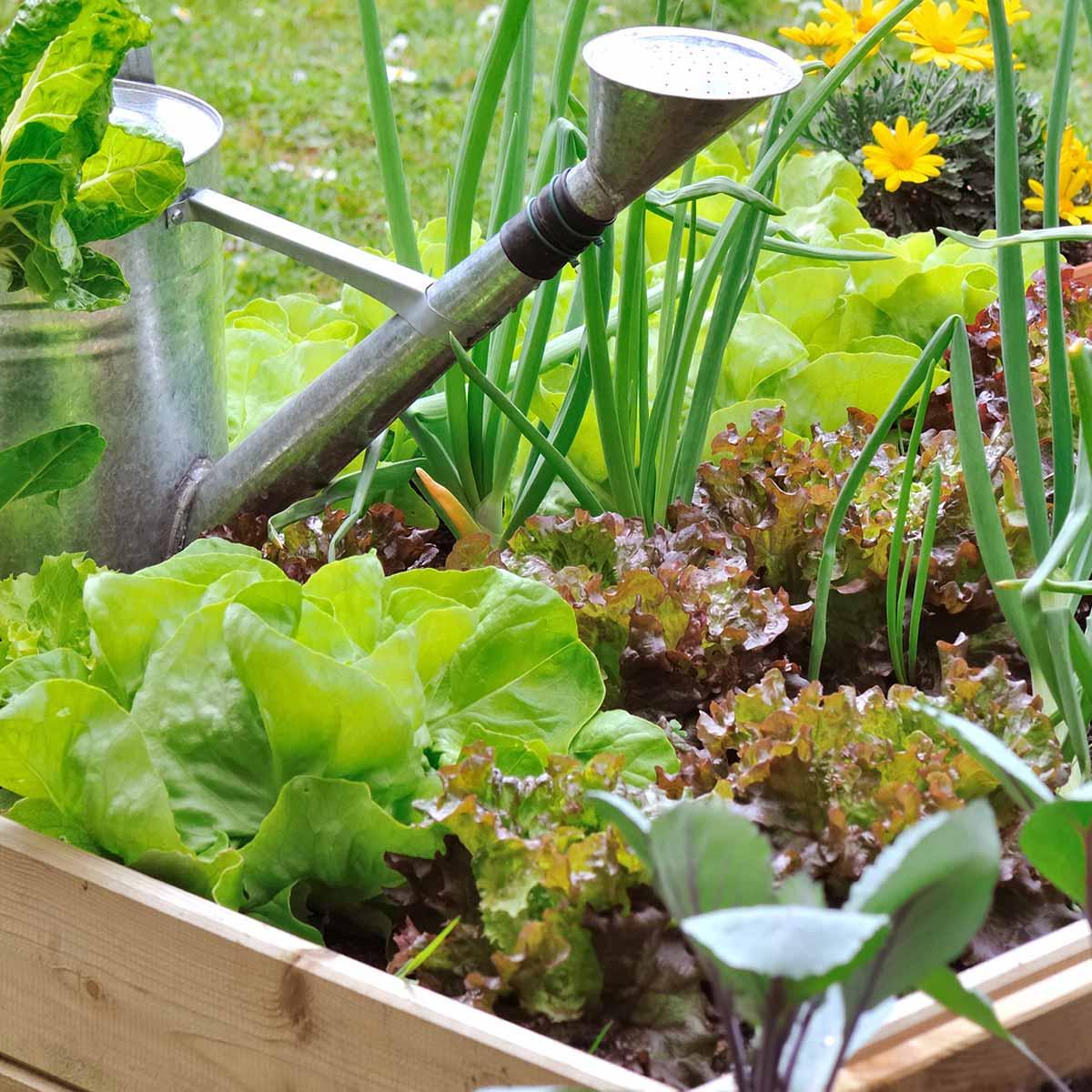 Un Petit Potager Productif acheter le bon matériel pour le potager et semis | jardins