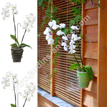 Vasi alternativi orchidee forum di - Vasi per orchidee ...