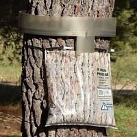 Eco Piège contre chenille processionnaire du pin écorce