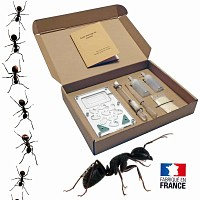Kit d'observation élevage de fourmis Messor Barbarus