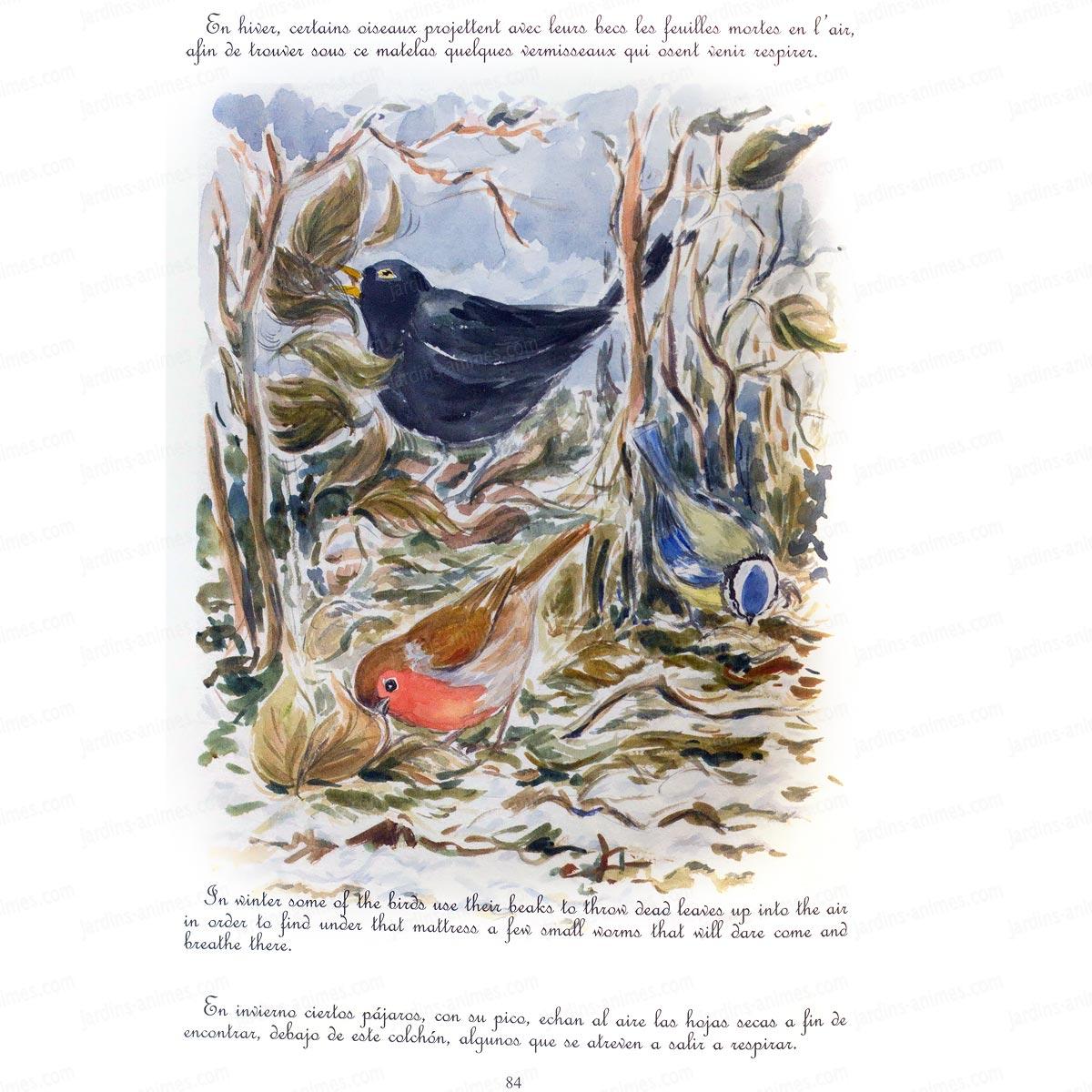 Le ballet des oiseaux trilingue et aquarelles livres for Les petits oiseaux