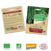 Ciboulette commune graine semence bio
