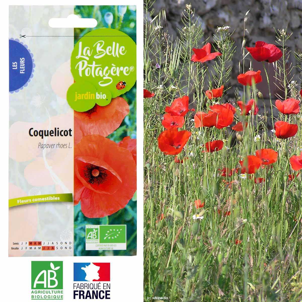 Planter Des Coquelicots Dans Son Jardin graines de coquelicot sauvage bio