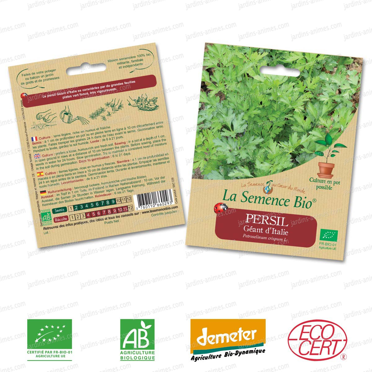 Persil g ant d 39 italie graine semence bio graines et for Graine de jardin