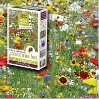 Prairie Fleurie - Fleurs amies des coccinelles - 7m2