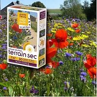 Prairie Fleurie - Mélange terrain sec - graines de fleurs - 7m2
