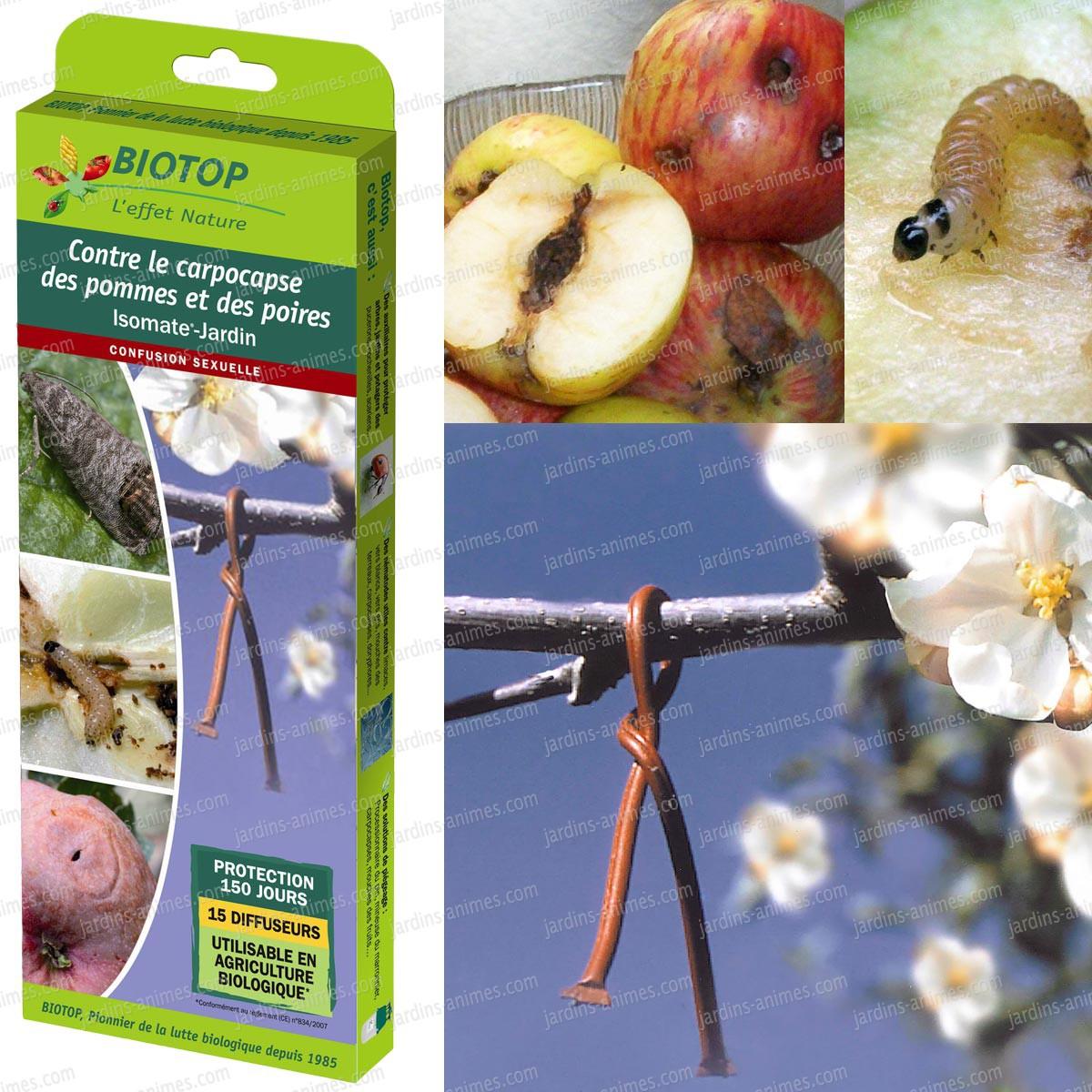 diffuseur contre carpocapse pomme poire isomate jardin. Black Bedroom Furniture Sets. Home Design Ideas
