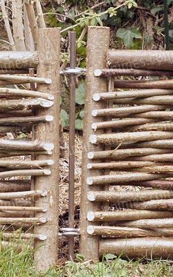 Bordure noisetier avec tige - Bordure de Jardin