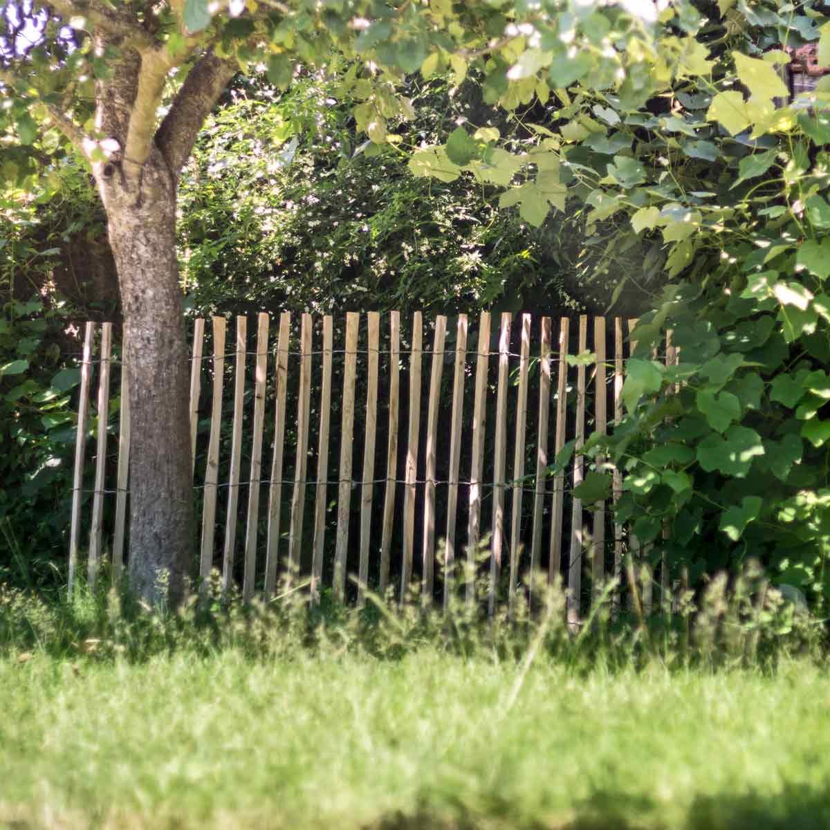 Brise Vue En Lierre choisir et installer une clôture ou un brise-vue | jardins