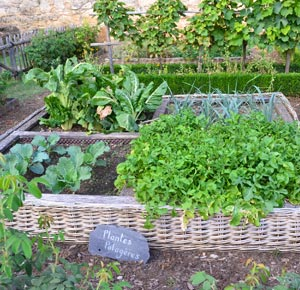 Cultiver son potager intelligemment