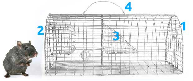 cage pi ge rat nasse multiprise traitement anti insectes et souris. Black Bedroom Furniture Sets. Home Design Ideas