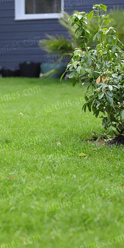 tondeuse gazon manuelle 300mm entretien du gazon et de la pelouse. Black Bedroom Furniture Sets. Home Design Ideas