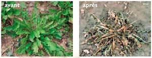 D sherbant finalsan ultima neudorff 750ml d sherbant antimousse naturel - Comment tuer les mauvaises herbes ...