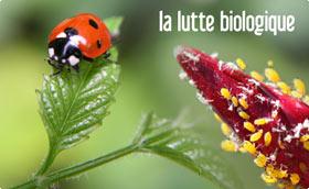 Anti pucerons cochenille bio vente en ligne - Traitement naturel contre les pucerons ...