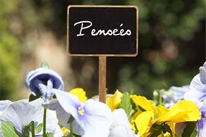 20x Etiquette bois à Plante Fleur ardoise Tige marque-plante Pot Tag Jardin