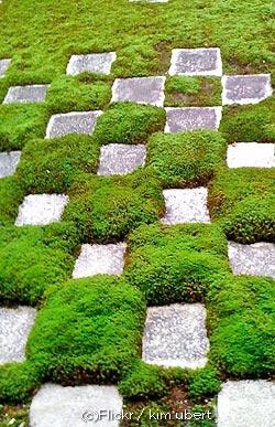 Plante pour jardin japonais plante pour jardin japonais for Acheter des plantes par internet