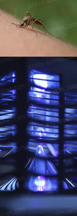 lampe anti moustique solaire grille lectrifi e. Black Bedroom Furniture Sets. Home Design Ideas