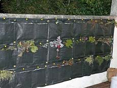 Gallery Of Une Creation Jardin Vertical Sur Un Mur Duun Client With  Habillage De Mur Extrieur