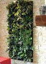 mur v g tal flowall vert tilleul mur v g tal jardin vertical. Black Bedroom Furniture Sets. Home Design Ideas