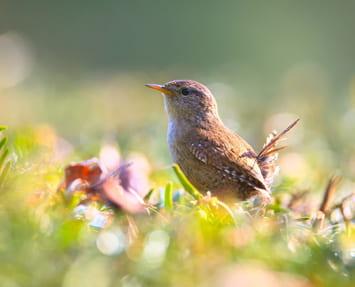 Protéger les oiseaux