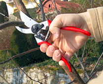 http://fr.jardins-animes.com/images/media/taille-branche-secateur-felco.jpg