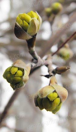 Traitement d 39 hiver huile 1l anti acarien puceron - Traitement des arbres fruitiers ...