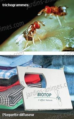 trichogrammes anti mites des v tements 1 boite 4 semaines anti mites bio. Black Bedroom Furniture Sets. Home Design Ideas