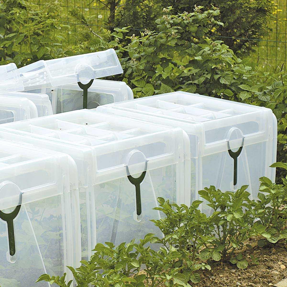 Tunnel de for age pour cultures 80x60cm x haut 50cm tunnel chassis cloche - Tunnel de forcage rigide pour jardin ...