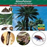 NemaPalmier 25 millions pour 1 à 3 palmiers
