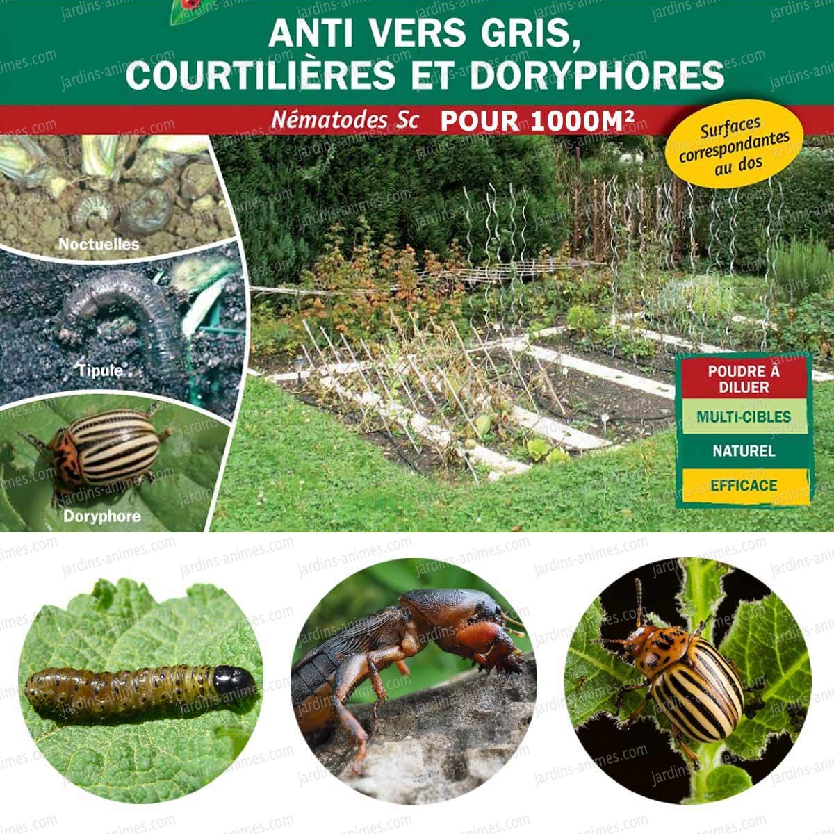 Nematodes 500millions anti vers gris courtili res for Traitement vers gris jardin