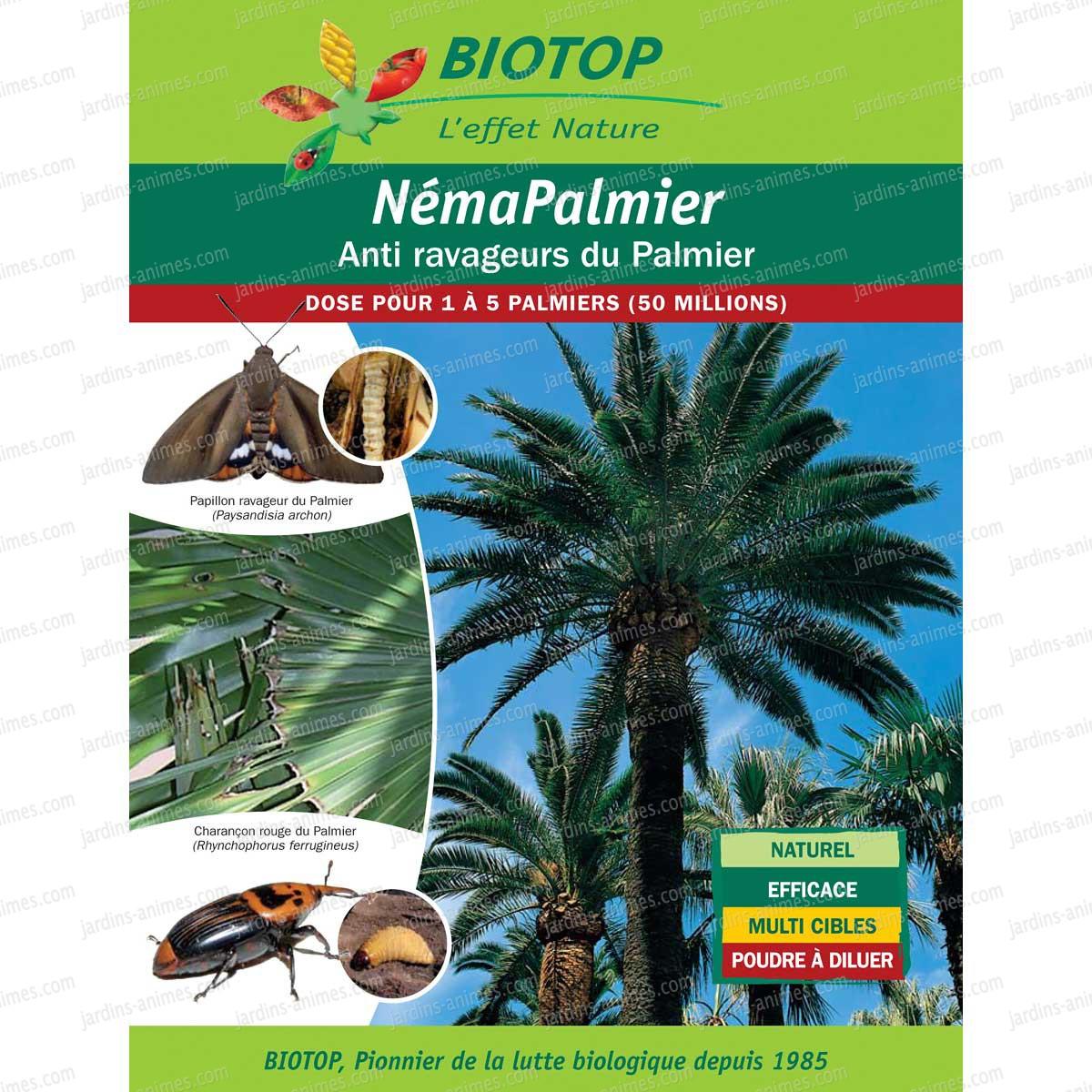 Nematode contre le papillon du palmier paysandisia archon - Lutter contre les doryphores bio ...