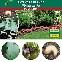 Nématodes anti vers blancs Hannetons et Otiorhynques - 10m2 bio