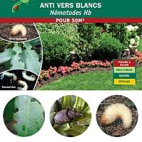 Nématodes anti vers blancs Hannetons et Otiorhynques - 50m2 bio