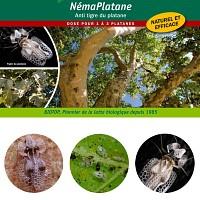 Jardin bio nematode for Vers gris noctuelles
