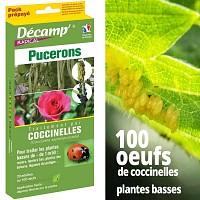 100 oeufs de coccinelles contre pucerons - Plantes basses