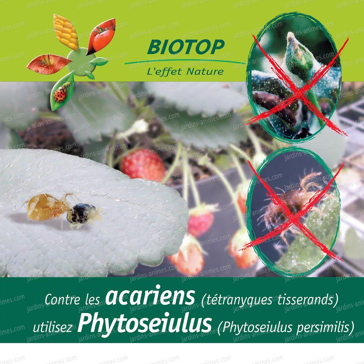 phytoseiulus contre acariens araign es rouges t tranyque tisserand anti pucerons cochenille bio. Black Bedroom Furniture Sets. Home Design Ideas