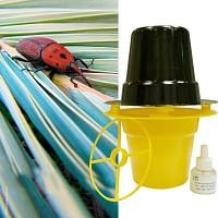 Piège à phéromones contre le charançon rouge du palmier