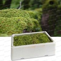 Apprivoiser la mousse au jardin - Jardin japonais mousse ...