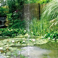 Les poissons de bassin for Pompe pour bassin poisson exterieur