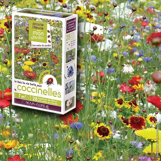 Prairie fleurie fleurs amies des coccinelles 7m2 for Plante fleurie de jardin