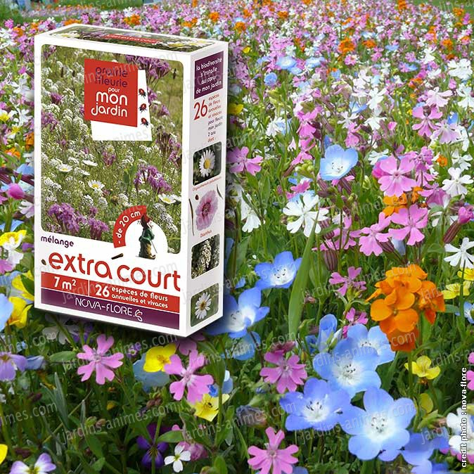 Prairie fleurie fleurs m lange extra court 7m2 for Catalogue de fleurs vivaces