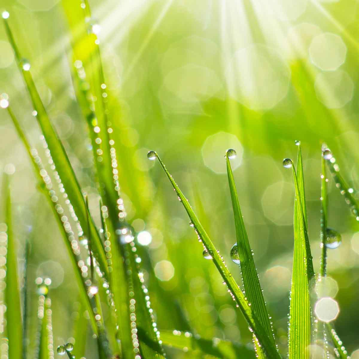 Eloigner Les Fourmis Au Jardin répulsif insecte naturel et traitement maladie | jardins