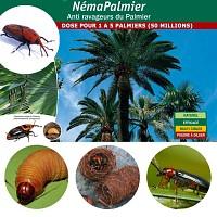 Nématodes contre le charançon rouge du palmier NemaPalmier